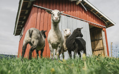 Welcome to Hiidenniemi animal farm!