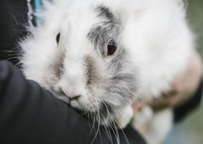 Кролик Луми