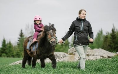 Shetland pony Ali